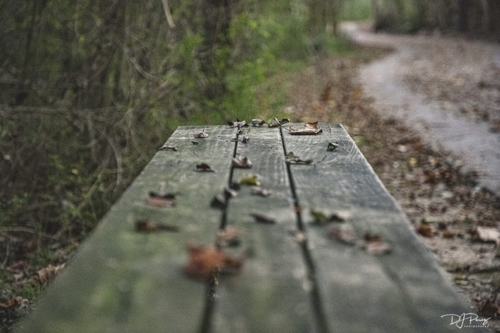 Suwanee Creek Trail Suwanee Georgia